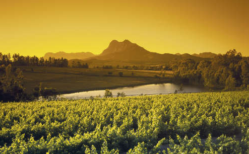 Daily_Winelands_Tour_Stellenbosch_Visit_4_Wine_Wineries_wine_tastings_cellar_tour_tour_guide_and_transport_-_R400pp_-_2015-04-20_09.24.18-e1450874344802
