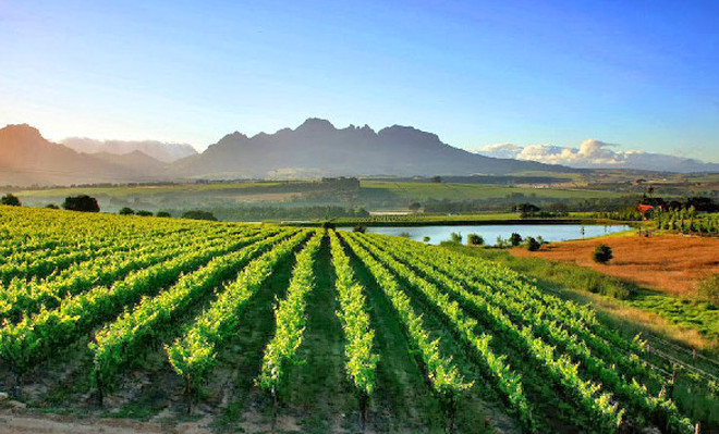 Stellenbosch-Vineyards-south-africa-e1450873802985
